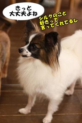 シルクIMG_3686
