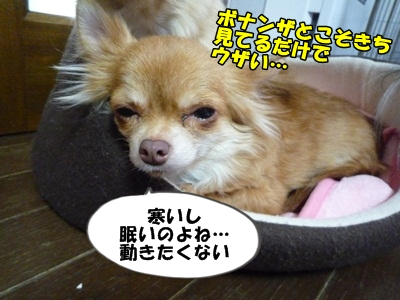 坪倉P1260708