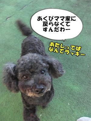おせろCIMG1910