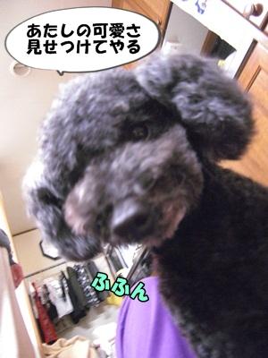 おせろCIMG1886