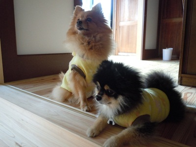 福寿モデル犬風