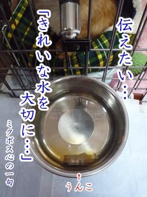 川柳P1260922