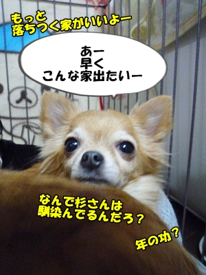 谷田部P1260825