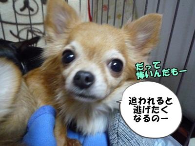 谷田部P1260823