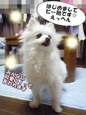 ぴーすけP1260931