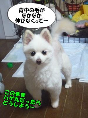 ぴーすけP1270108