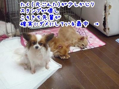 睡眠P1270484