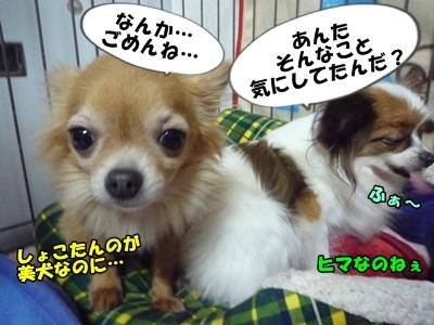 谷田部P1270570