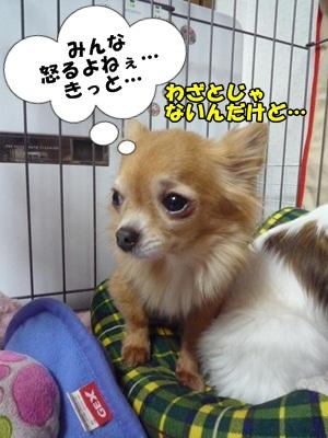 谷田部P1270553