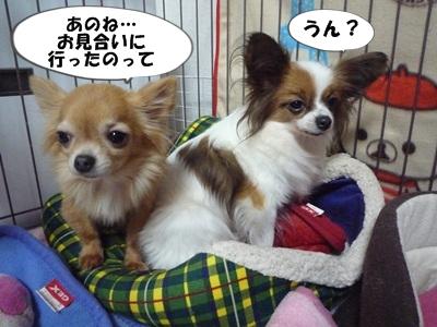 谷田部P1270560