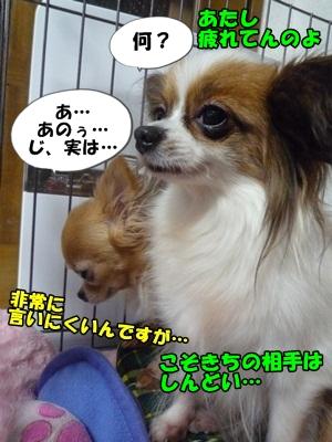 谷田部P1270536