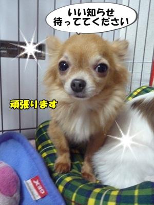 谷田部P1270556