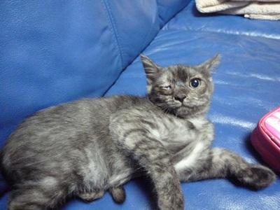 猫P1330010