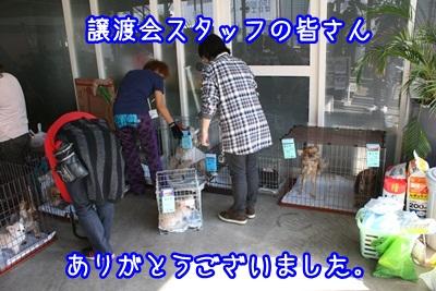 譲渡会IMG_2169