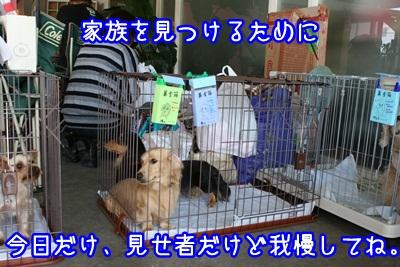 譲渡会IMG_2183
