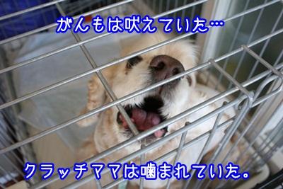 譲渡会IMG_2200
