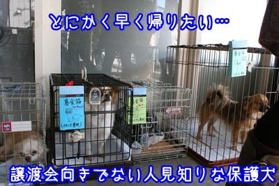 譲渡会IMG_2186