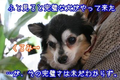 譲渡会IMG_2213