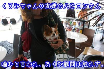 譲渡会IMG_2214