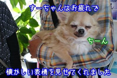 譲渡会IMG_2279