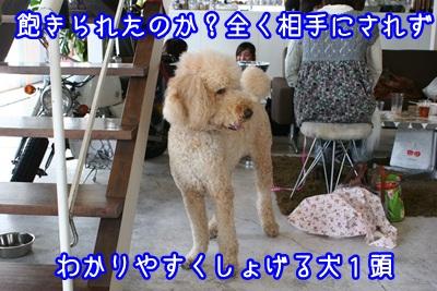 譲渡会IMG_2289