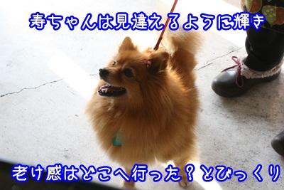 譲渡会IMG_2318