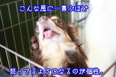 譲渡会IMG_2314