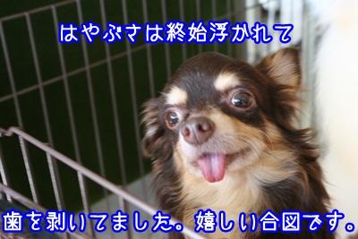 譲渡会IMG_2313