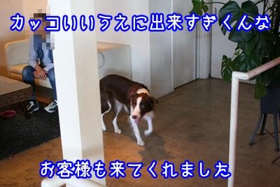 譲渡会IMG_2357
