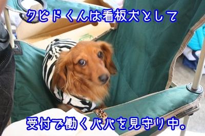 譲渡会IMG_2358