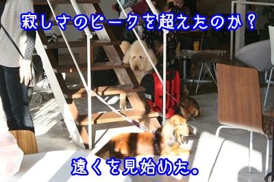 譲渡会IMG_2364