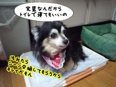 くるみP1320745