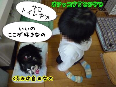 くるみP1320747