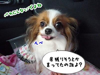 しょこちゃんP1330483