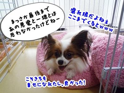 しょこちゃんP1330519