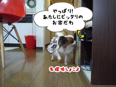 しょこちゃんP1330504