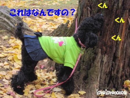 IMG_6094-cocoa.jpg