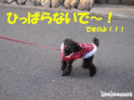 IMG_7673-cocoa.jpg