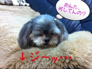 momo1118_5.jpg