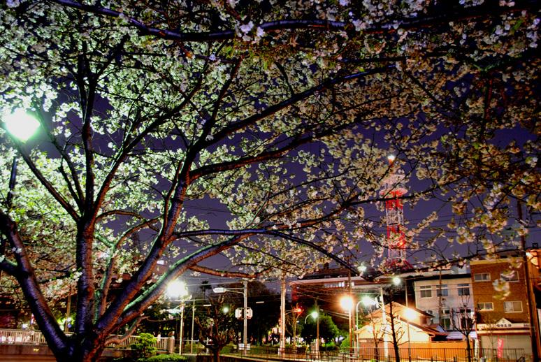 夜桜20110405-2