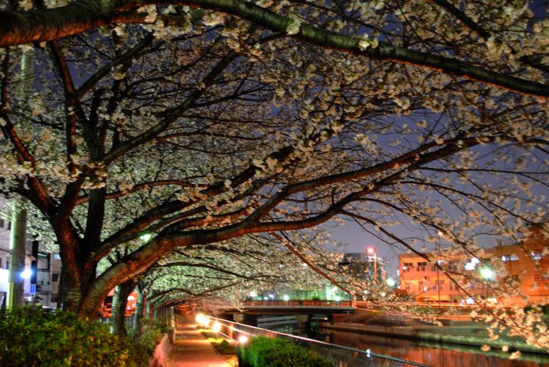 夜桜20110405-1