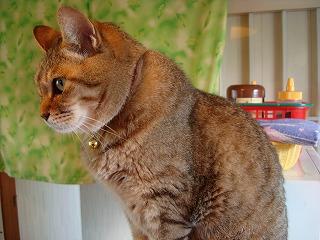猫だけに、猫背ですね。