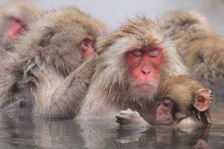 猿だって、入浴するんです。