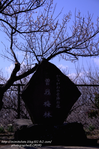 IMG_0601_20110217192659.jpg
