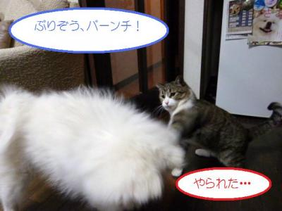 2011_0316_040741-P1000204.jpg