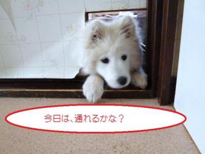 2011_0319_154155-P1000341.jpg