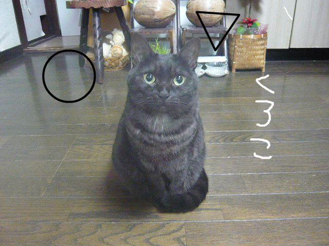 snap_minamimamami_201012317656.jpg