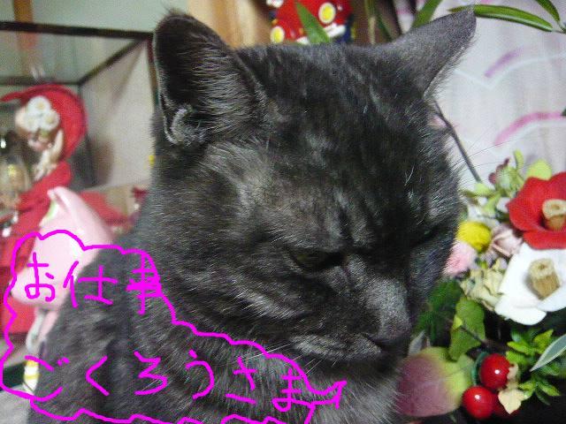 snap_minamimamami_201113185246.jpg