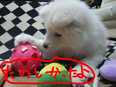 snap_minamimamami_20112117419.jpg