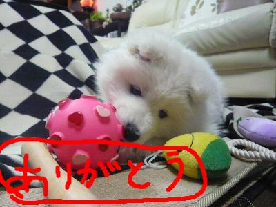 snap_minamimamami_20112118849.jpg